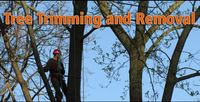 Local Business  Campbelltown Tree Service in Denham Court NSW