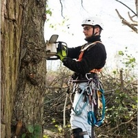 Local Business Tree Service Stamford in Stamford CT