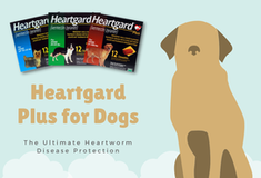 Heartgard Plus Chewables For Dogs - 20% Off on All Orders