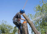 Local Business Maple Ridge Tree Service in Maple Ridge (BC) BC