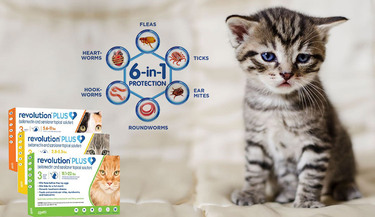 Buy Revolution Plus For Cats – A Powerful 6 in 1 Parasitic Treatment