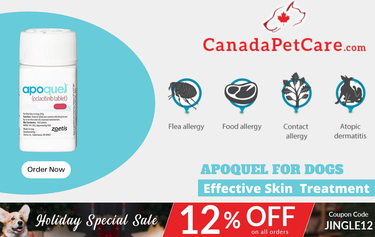 Holiday Special Offer on Apoquel For Dogs